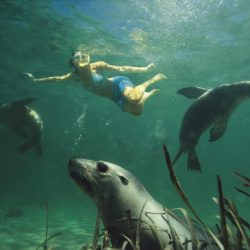 Baird Bay Swimming with Sea Lions - Crooked Compass by Air