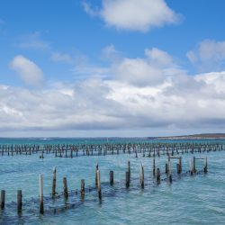 Oyster leases in Coffin Bay, low tide